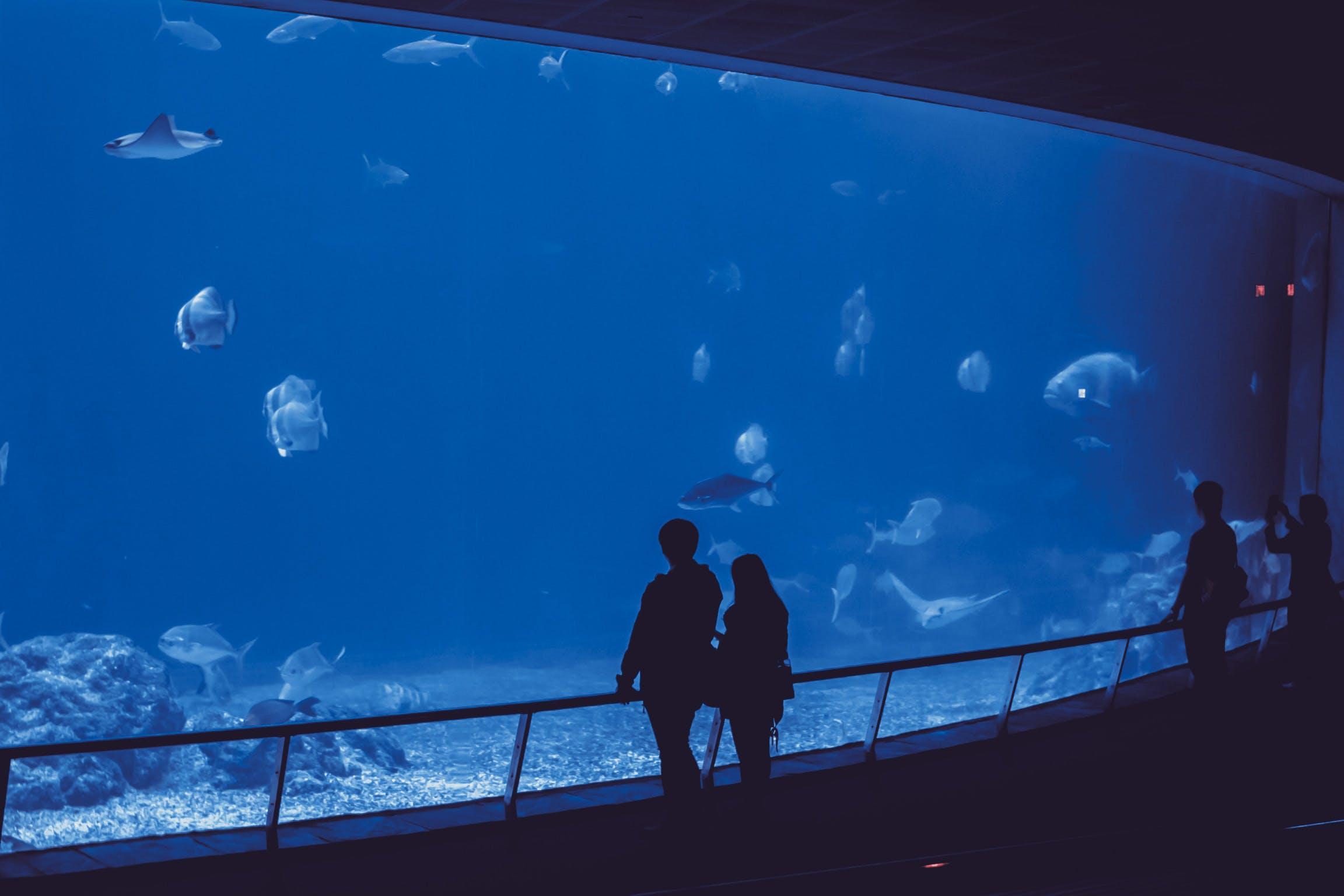 Základová fotografie zdarma na téma akvárium, klidné vody, lidé, minimalista
