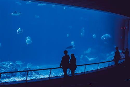 Free stock photo of aquarium, calm waters, fish, minimalist
