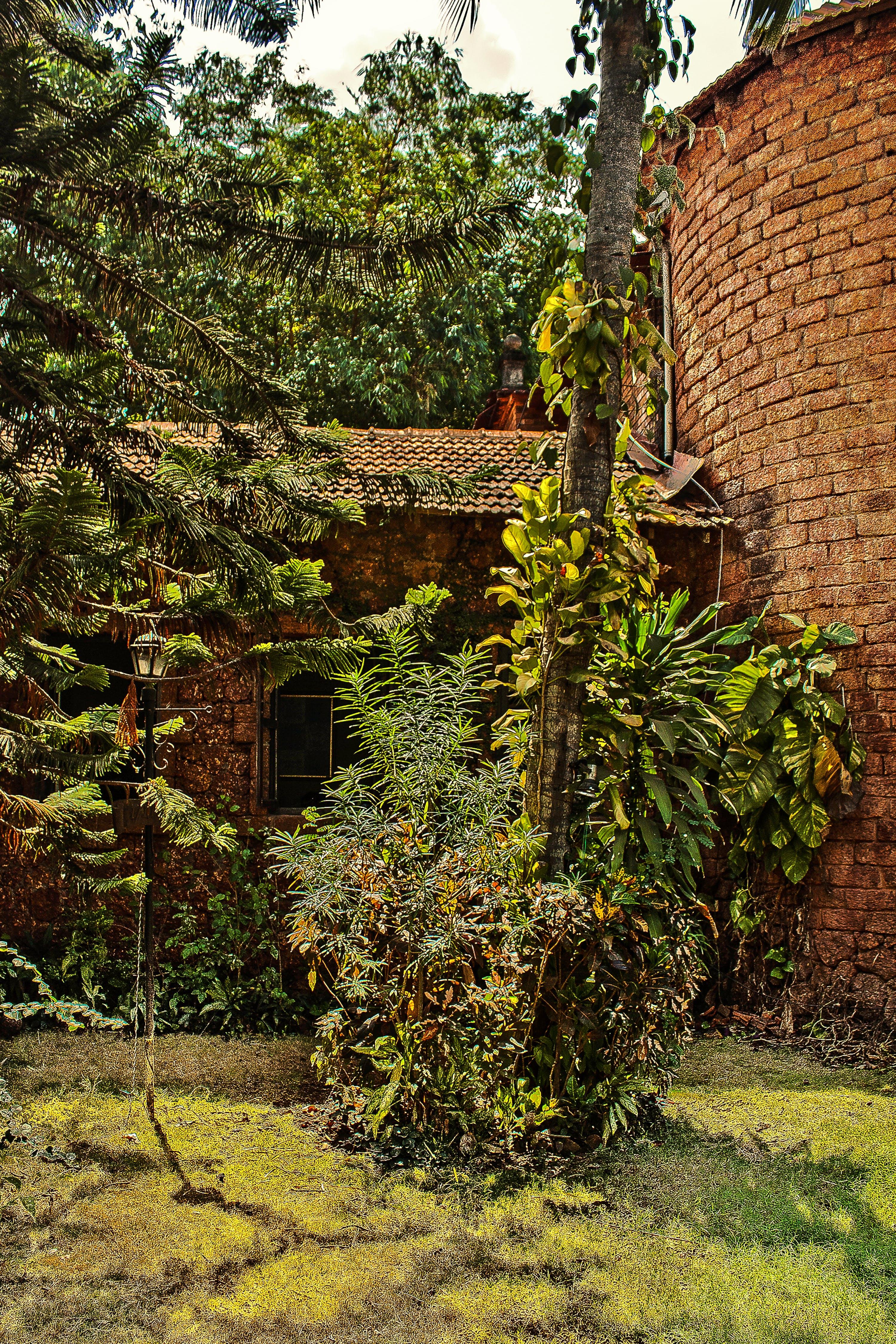 Free stock photo of garden, House in Goa