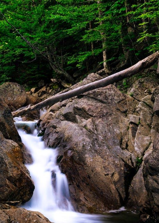 klart vand, mosklædte sten, natur