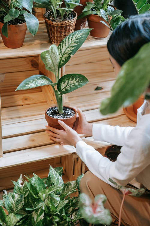 Person Holding Green Plant in Brown Clay Pot