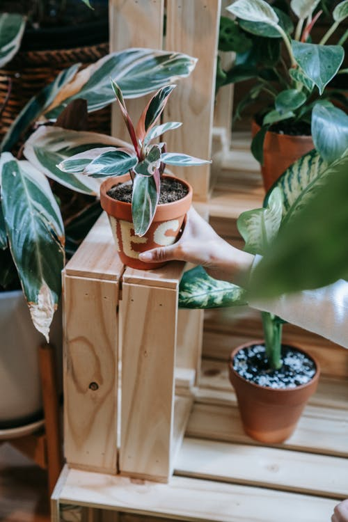 Person Holding Potted Green Plant