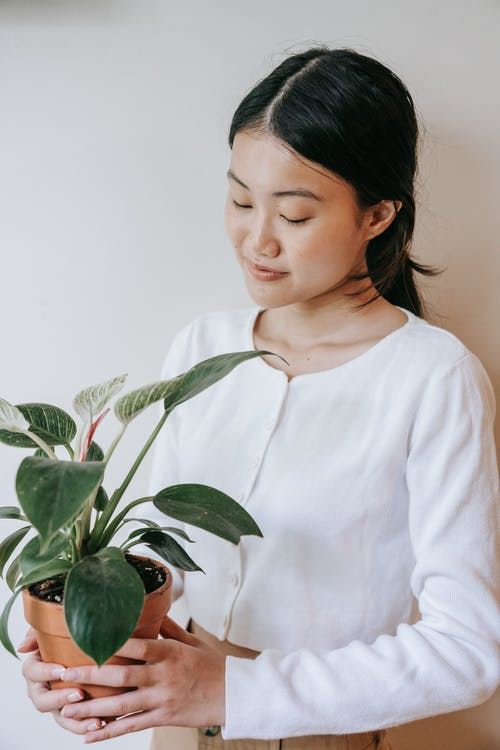 Woman in White Long Sleeve Shirt Holding Green Plant