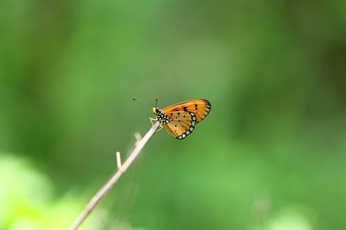 Foto stok gratis binatang, kupu-kupu