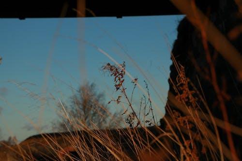 Foto d'estoc gratuïta de capvespre, herba, natura