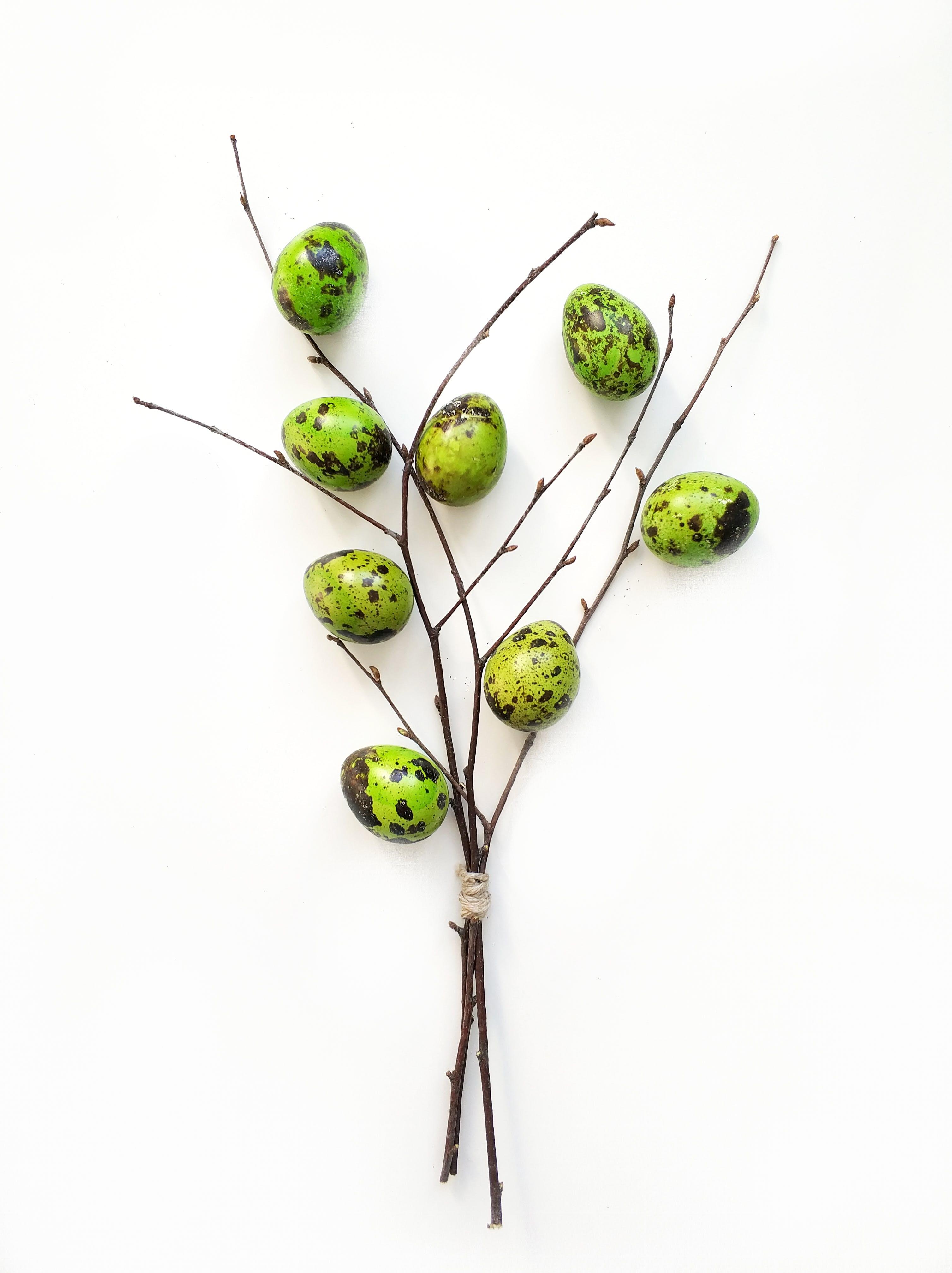Green Quail Eggs on Tree Branch