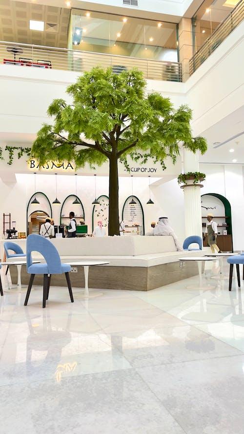 Ingyenes stockfotó dubaj, fa, kreatív iroda témában