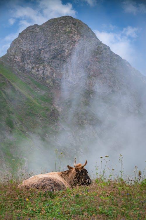 Δωρεάν στοκ φωτογραφιών με rock, άγριος, βουνό
