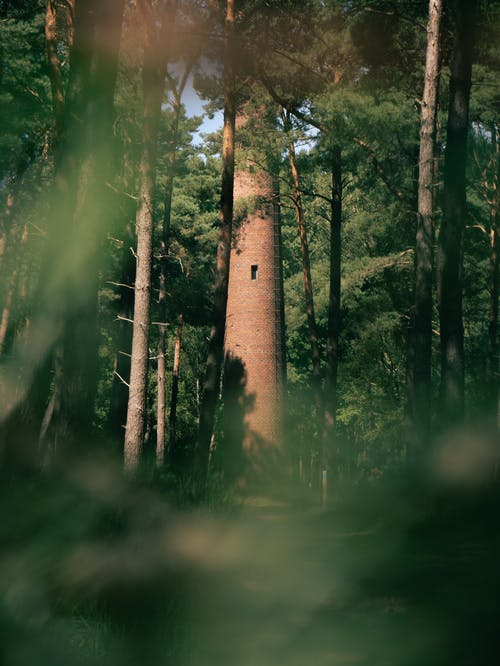 Free stock photo of dark green, forest, green