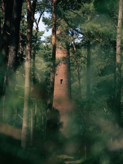 Brown Brick Tower in the Middle of Forest