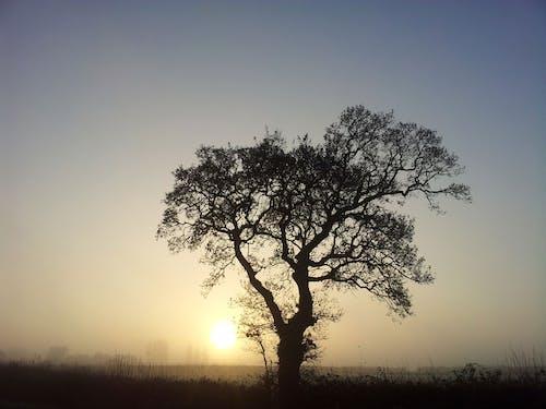 Imagine de stoc gratuită din apus, arbore, natură