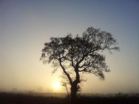 Free stock photo of nature, sunset, tree