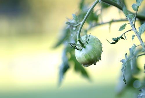 Free stock photo of close-up, freshness, garden