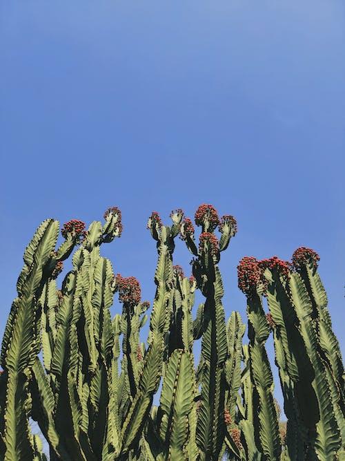 Kostnadsfri bild av blad, blomma, flora