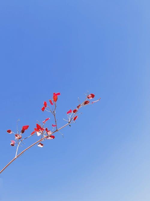 Kostnadsfri bild av blå himmel, blad, blomma