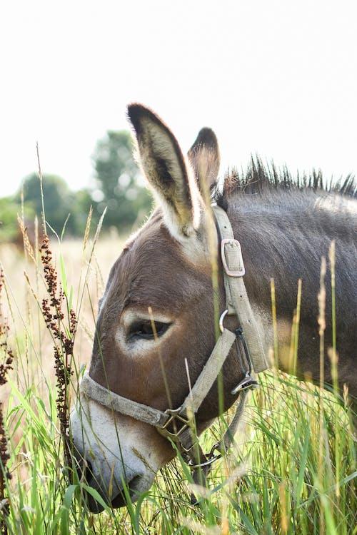 Δωρεάν στοκ φωτογραφιών με άγρια φύση, άγριος, αγρόκτημα
