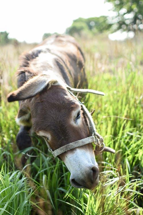 Δωρεάν στοκ φωτογραφιών με άγρια φύση, αγρόκτημα, αγροτικός