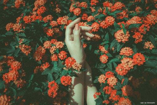 Základová fotografie zdarma na téma beyonce, chytit, kytka, ruce