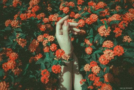 Free stock photo of hands, flower, sad, catch