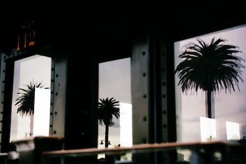 Foto d'estoc gratuïta de arbres, arquitectura, edifici, finestres