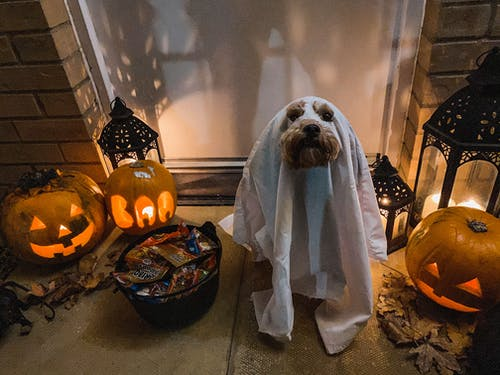 Dog on Ghost Costume during Halloween