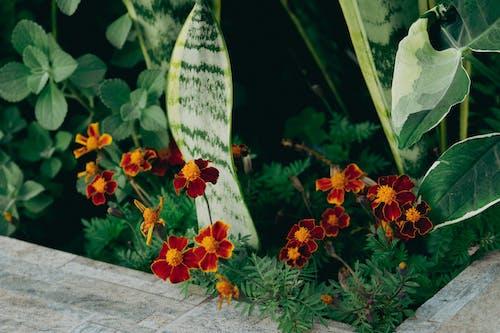 Základová fotografie zdarma na téma barva, dekorace, flóra