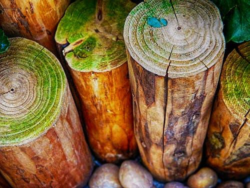 Základová fotografie zdarma na téma dřevěná polena, dřevěné dřevo, dřevěný, dřevo