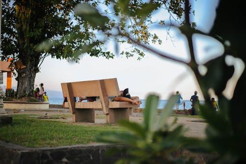 Foto profissional grátis de ao ar livre, árvore, assento, Banco