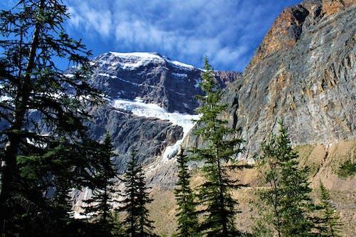 Imagine de stoc gratuită din cer senin, conifere, gheață, munte
