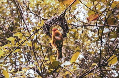 Foto profissional grátis de ave, casa de passarinho, ninho de passarinho