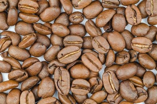 Foto d'estoc gratuïta de aroma, cafeïna, cru, fesols
