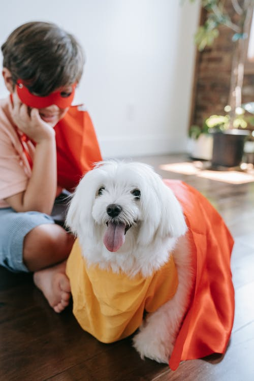 Woman in Yellow T-shirt Holding White Long Coat Small Dog