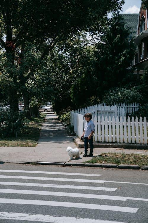 Foto stok gratis anak, anak laki-laki, anjing