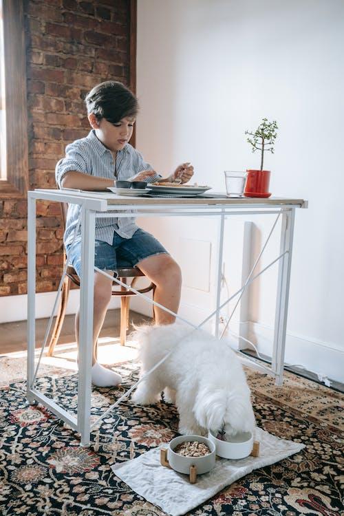 Kostenloses Stock Foto zu drinnen, entspannung, erwachsener