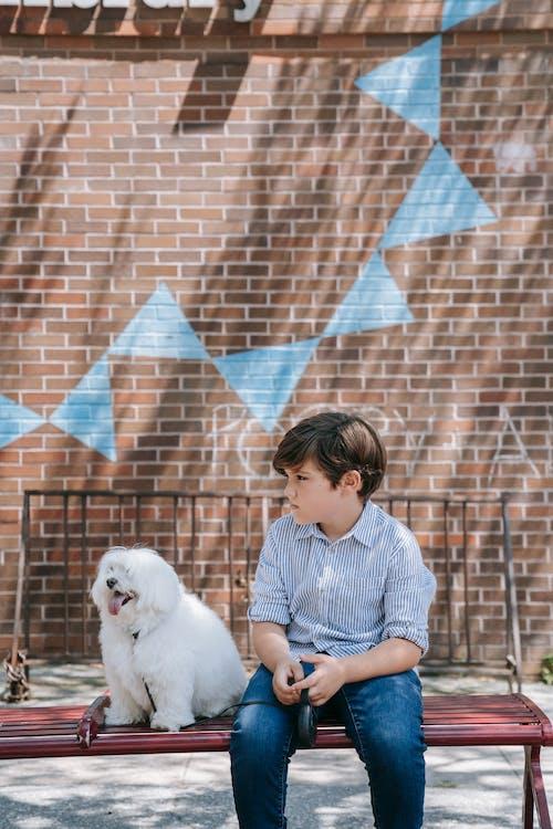 Kostenloses Stock Foto zu backstein, draußen, erwachsener
