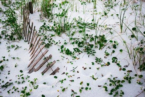 Immagine gratuita di legno, sabbia