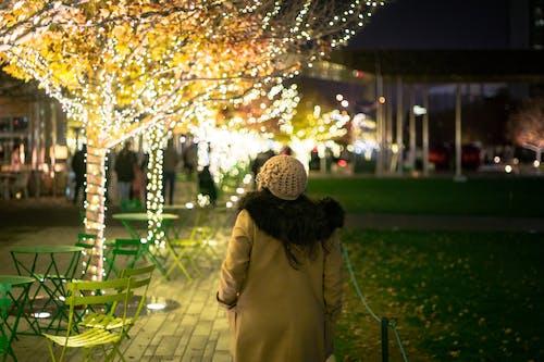 Immagine gratuita di dallas, inverno, parco
