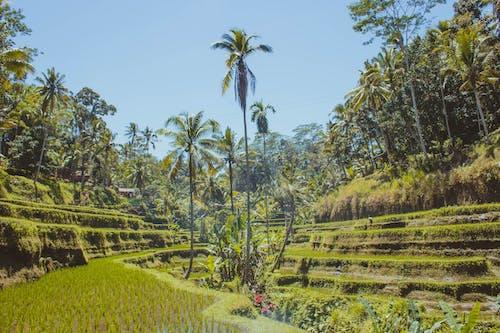 Бесплатное стоковое фото с Бали, красивый пейзаж, пальмы
