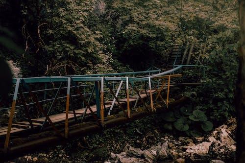 Free stock photo of bridge, dark forest wallpaper