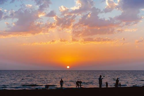 剪影, 夏天, 夏季 的 免費圖庫相片