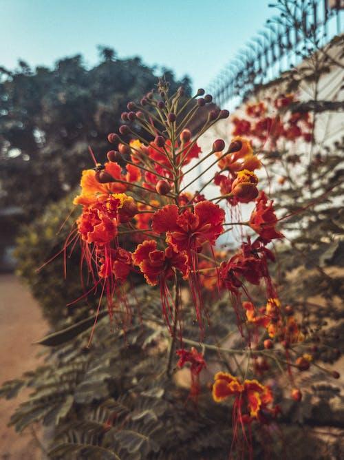 Gratis lagerfoto af appelsin, blomsterblad, flot natur