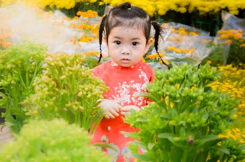 Free stock photo of baby, beautiful flowers, children, cute