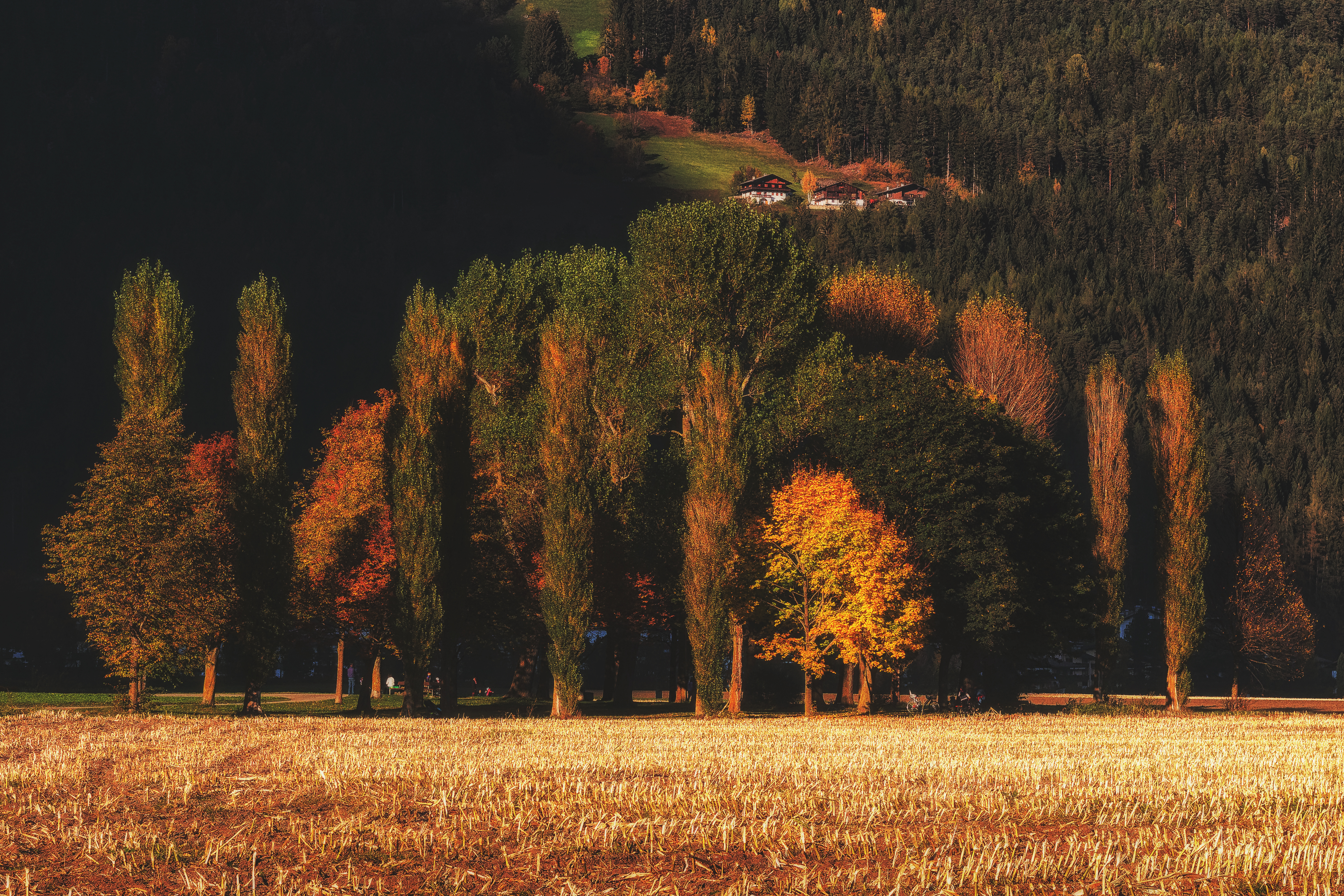 Brown and Green Trees