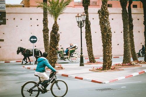 คลังภาพถ่ายฟรี ของ กลางวัน, การขนส่ง, ต้นไม้, ถนน