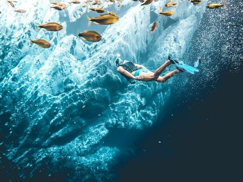 Ilmainen kuvapankkikuva tunnisteilla Kalat, kauneus luonnossa, seikkailu