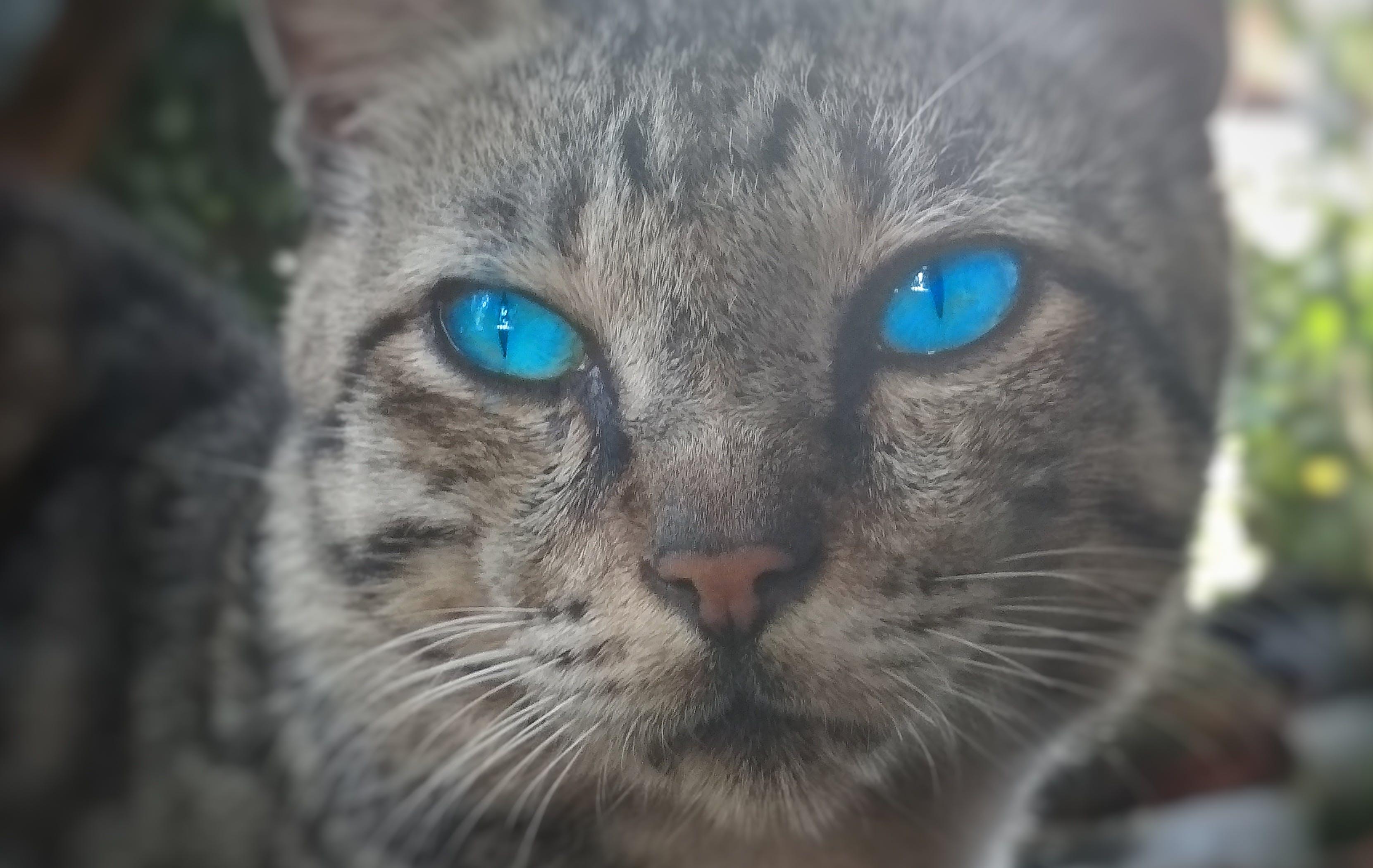 blau, desenfocament, gat