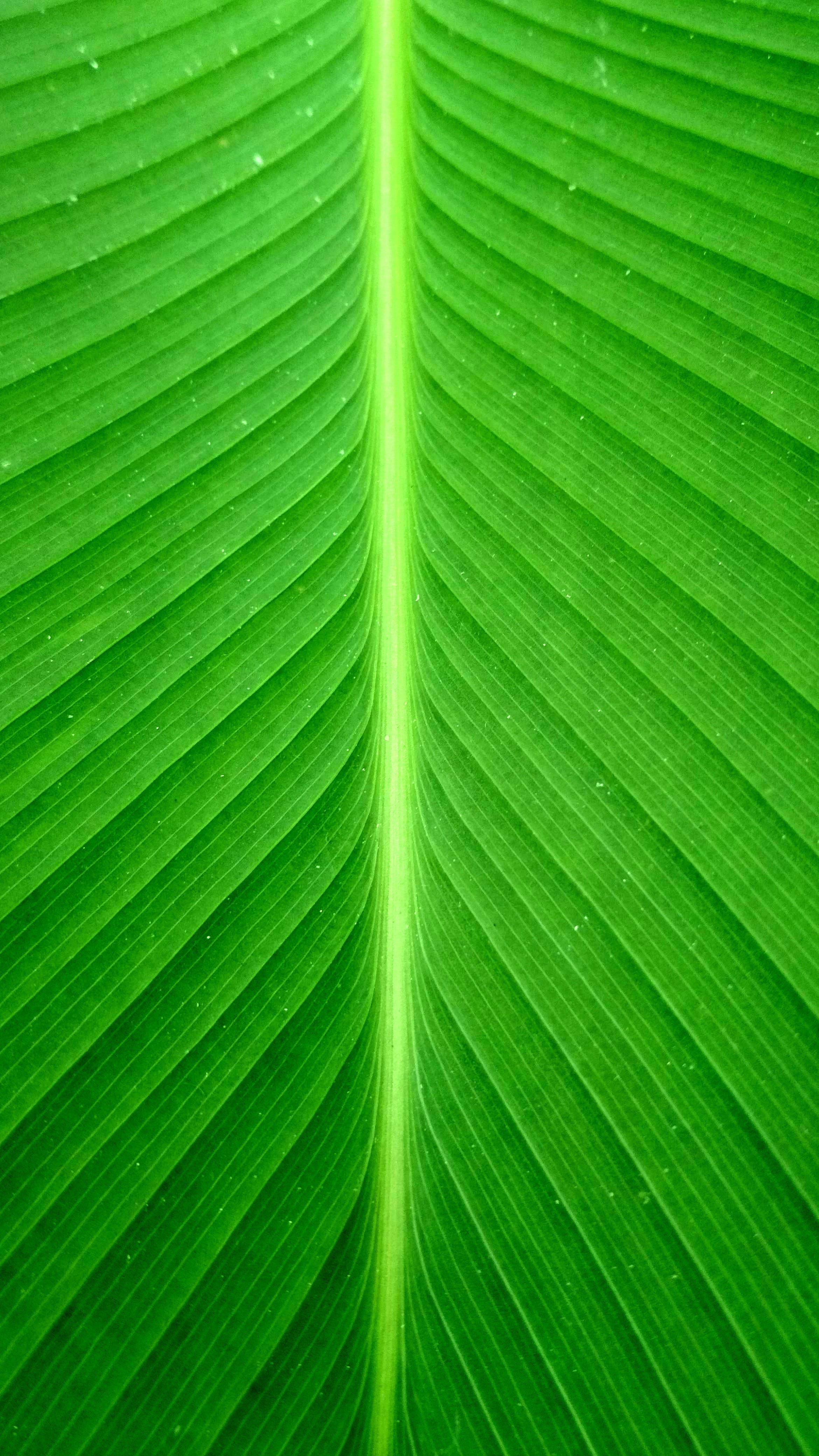 green, line, portrait