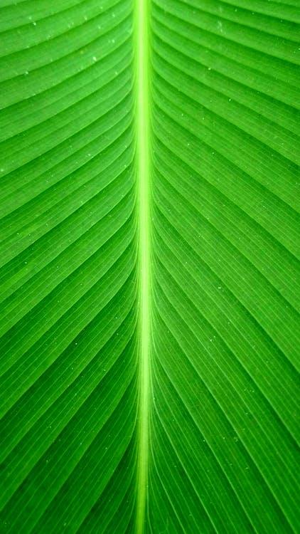 ภาพพอร์ตเทรต, สีเขียว, เส้น