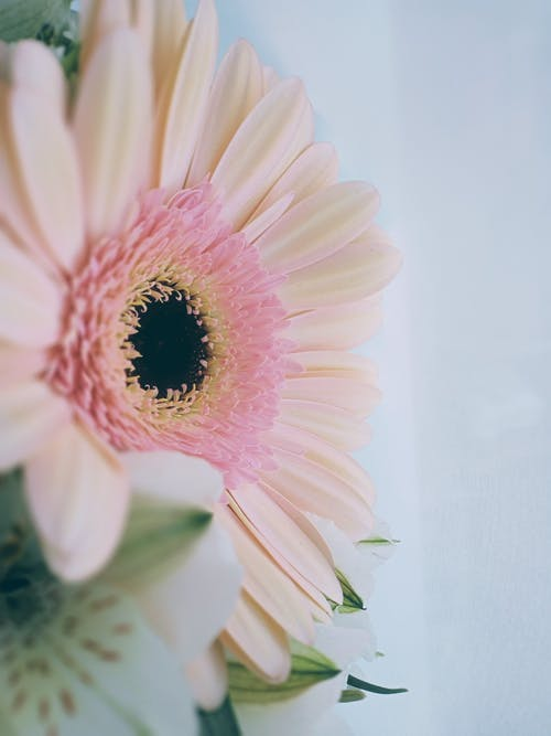 White and Pink Flower in Close Up Photography