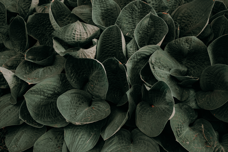 Kostenloses Stock Foto zu muster, garten, blätter, pflanzen